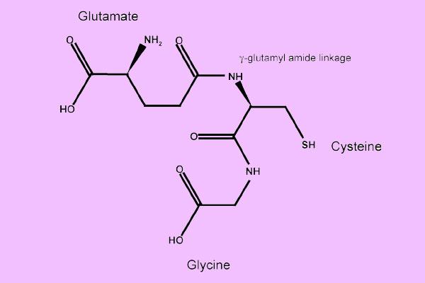 Công thức cấu tạo của L-Glutathione