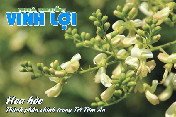 Trĩ Tâm An có thành phần chính là hoa hòe