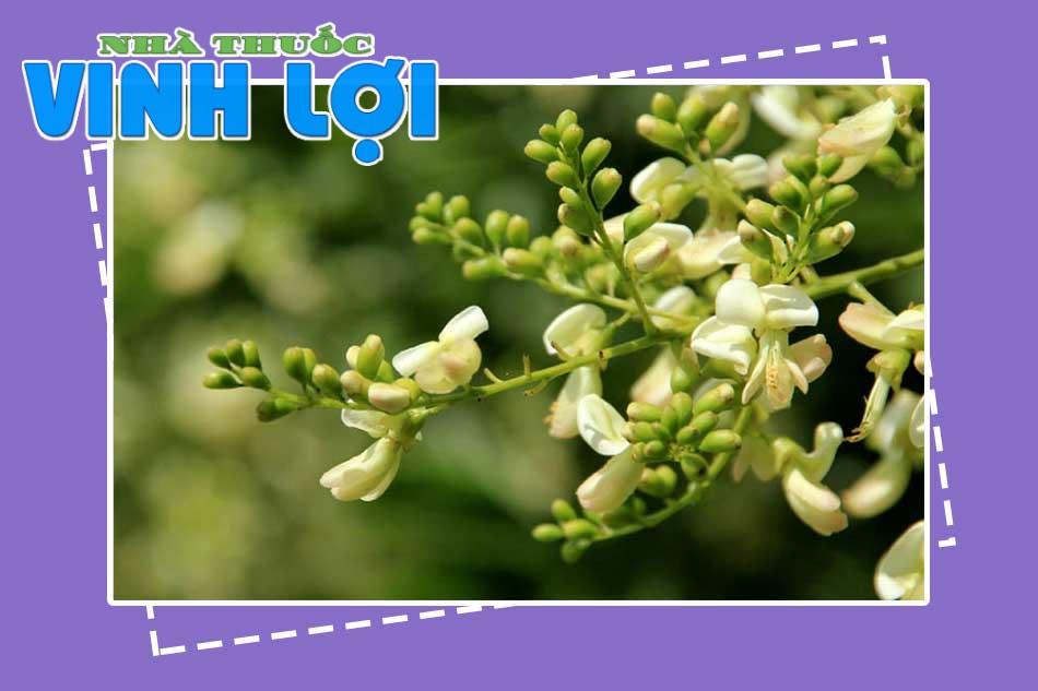 Chữa bệnh trĩ nội độ 1 bằng hoa hòe