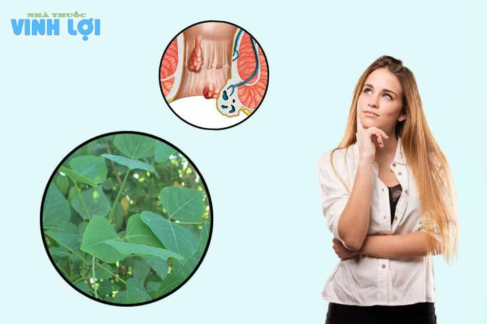 Vì sao lá vông được dùng trong chữa bệnh trĩ?