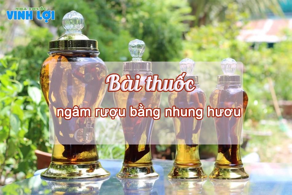 Uống rượu ngâm nhung hươu 2 lần mỗi ngày giúp nâng cao chất lượng tinh trùng
